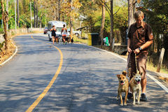 A worker of shelter for dogs is walking with two dogs from shelter. Chiang Mai, Thailand.