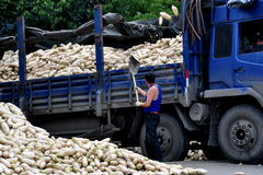 Pengzhou, China: Worker with Daikon Radishes Stock Photos