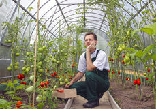 Worker sitting thinking about harvest of tomatoes. Worker sitting thinking about the harvest of tomatoes in the greenhouse of transparent polycarbonate stock image
