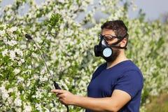 Worker spraying cherry tree Stock Photo