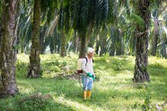 Spraying herbicides at oil palm. Worker is spraying herbicides to poisoning weeds in oil palm plantations royalty free stock photos