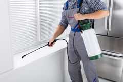 Worker Spraying Insecticide On Windowsill. Midsection Of Worker Spraying Insecticide On Windowsill With Sprayer In Kitchen Stock Photography