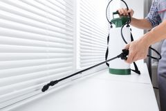 Worker Spraying Insecticide On Windowsill. Midsection Of Worker Spraying Insecticide On Windowsill With Sprayer In Kitchen Stock Photo