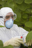 Worker Spraying Plants In Greenhouse. Male worker in protective mask and suit spraying plants in greenhouse Royalty Free Stock Images