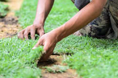 Worker unrolling laying sod for new grass Stock Images