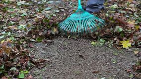 Worker use rake in the park in autumn stock video footage