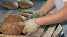 A worker collects hot round bread loaves into a wooden tray for packing. A worker uses gloves to collect hot baked bread loaves into a wooden tray stock video