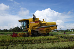 Worker uses machine to harvest rice on paddy field Stock Photos