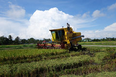 Worker uses machine to harvest rice on paddy field Royalty Free Stock Photos