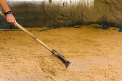 Worker are using rakes to sweep the rice husk into a single pile for easier packing.  Stock Image