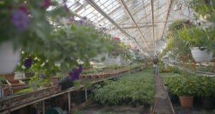 Worker watering flowers in 4K stock video footage