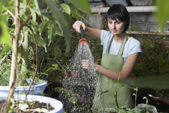 Worker Watering Plants In Greenhouse Stock Photos