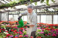 Worker watering plants Royalty Free Stock Images