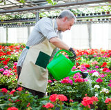 Worker watering plants Stock Photos