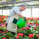 Worker watering plants Stock Photos