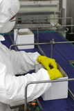 Worker working with boxes at on packing line line in factory Royalty Free Stock Photo