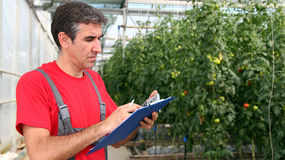 Worker Writing on Clipboard in Greenhouse. Portrait of a man at work in commercial greenhouse. Selective focus Royalty Free Stock Images
