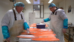 Workers applying salt on salmon fillets lying on table on the fish factory. stock video