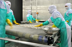 Workers are arranging shrimps in a line to the freezing machine in a seafood factory in Vietnam Royalty Free Stock Photos