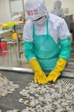 Workers are arranging shrimps in a line to the freezing machine in a seafood factory in Vietnam Royalty Free Stock Photo
