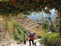 Workers Bear Weight with Their Heads, Trekking Village in Nepal Stock Photo