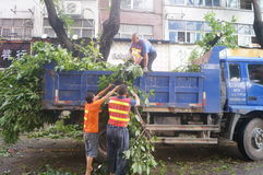 Workers carry typhoon toppled trees. The workers are handling typhoon toppled trees, in Shenzhen, China royalty free stock photos