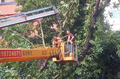 Workers carry typhoon toppled trees. The workers are handling typhoon toppled trees, in Shenzhen, China stock image