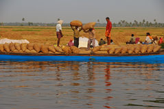 Workers carrying heavy gunny sack of harvested rice on their head onto the long blue boat to be transported Royalty Free Stock Image