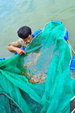 Workers are catching Koi fish broodstocks from ponds to tanks Stock Image