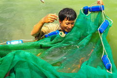 Workers are catching Koi fish broodstocks from ponds to tanks Stock Images