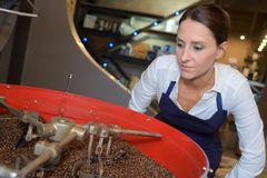 Workers choosing best quality beans at coffee factory. Woman royalty free stock image