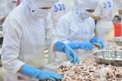 Workers are classifying octopus for exporting in a seafood processing factory Royalty Free Stock Photos