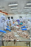 Workers are classifying octopus for exporting in a seafood processing factory Stock Photo