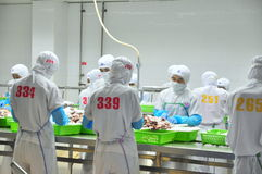 Workers are classifying octopus for exporting in a seafood processing factory Royalty Free Stock Photo