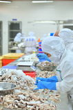 Workers are classifying octopus for exporting in a seafood processing factory Stock Image