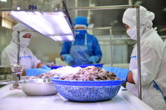 Workers are classifying octopus for exporting in a seafood processing factory Stock Images