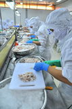 Workers are classifying octopus for exporting in a seafood processing factory Stock Photos