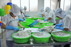Workers are classifying raw fresh octopus to transfer to the next step of processing line in a seafood factory in Vietnam Stock Image