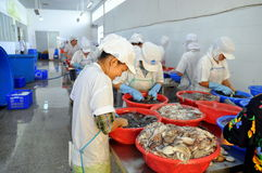 Workers are classifying raw fresh octopus to transfer to the next step of processing line in a seafood factory in Vietnam Stock Photos