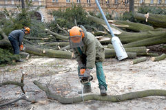 Workers clean the fallen tree. After-effects of windstorm in Middle Europe Royalty Free Stock Photography