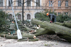 Workers clean the fallen tree. After-effects of windstorm in Middle Europe Royalty Free Stock Image