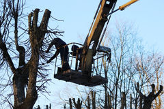 workers cut branches and trims a trees limes using the lift in the park. Stock Photo
