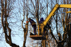 workers cut branches and trims a trees limes using the lift in the park. Stock Photos