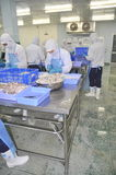 Workers are cutting raw fresh materials in a seafood factory in Ho Chi Minh city, Vietnam Royalty Free Stock Photography
