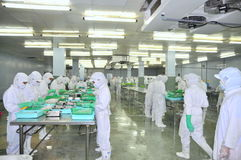 Workers are cutting raw fresh materials in a seafood factory in Ho Chi Minh city, Vietnam Royalty Free Stock Photo