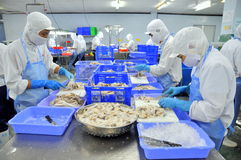 Workers are cutting raw fresh octopus in a seafood factory in Ho Chi Minh city, Vietnam Royalty Free Stock Photography