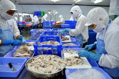Workers are cutting raw fresh octopus in a seafood factory in Ho Chi Minh city, Vietnam Royalty Free Stock Photos