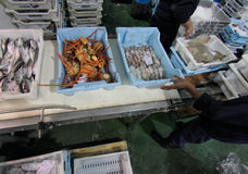 Workers distributing cargo on fish market Stock Image