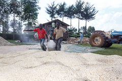 Workers drag a bag of maize Stock Image