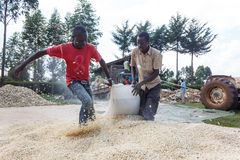 Workers drag a bag of maize Royalty Free Stock Image